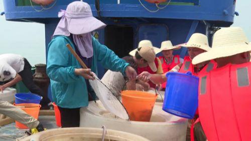 泉港峰尾:海域增殖放流 保护渔业资源
